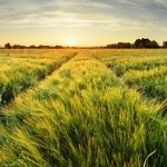 Green Fields with sunrise - green energy
