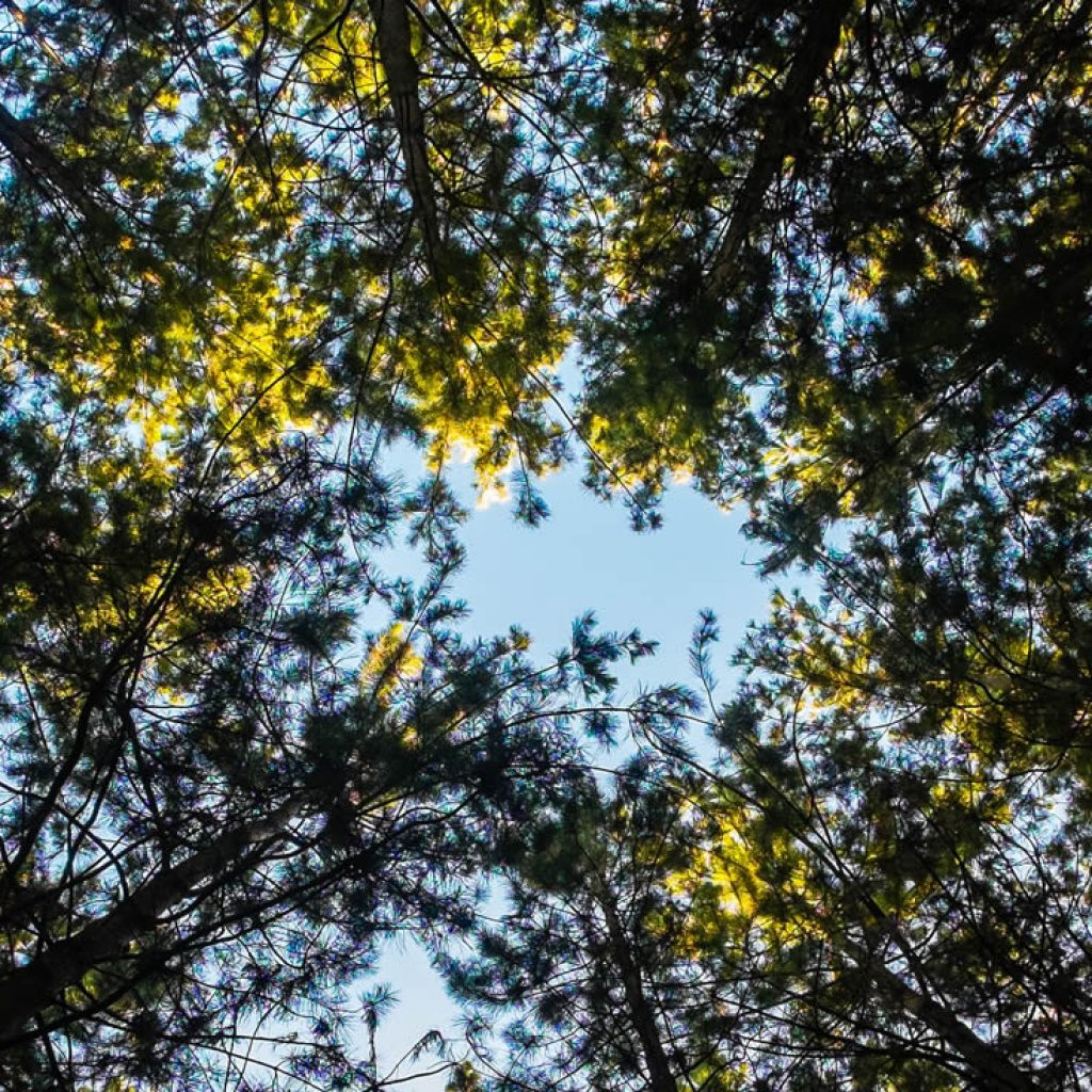 Sunshine through tree tops - green energy